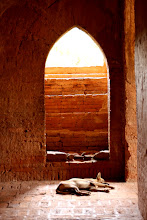 Photo: Year 2 Day 57 - Dog in Dhammayan Gyi Temple