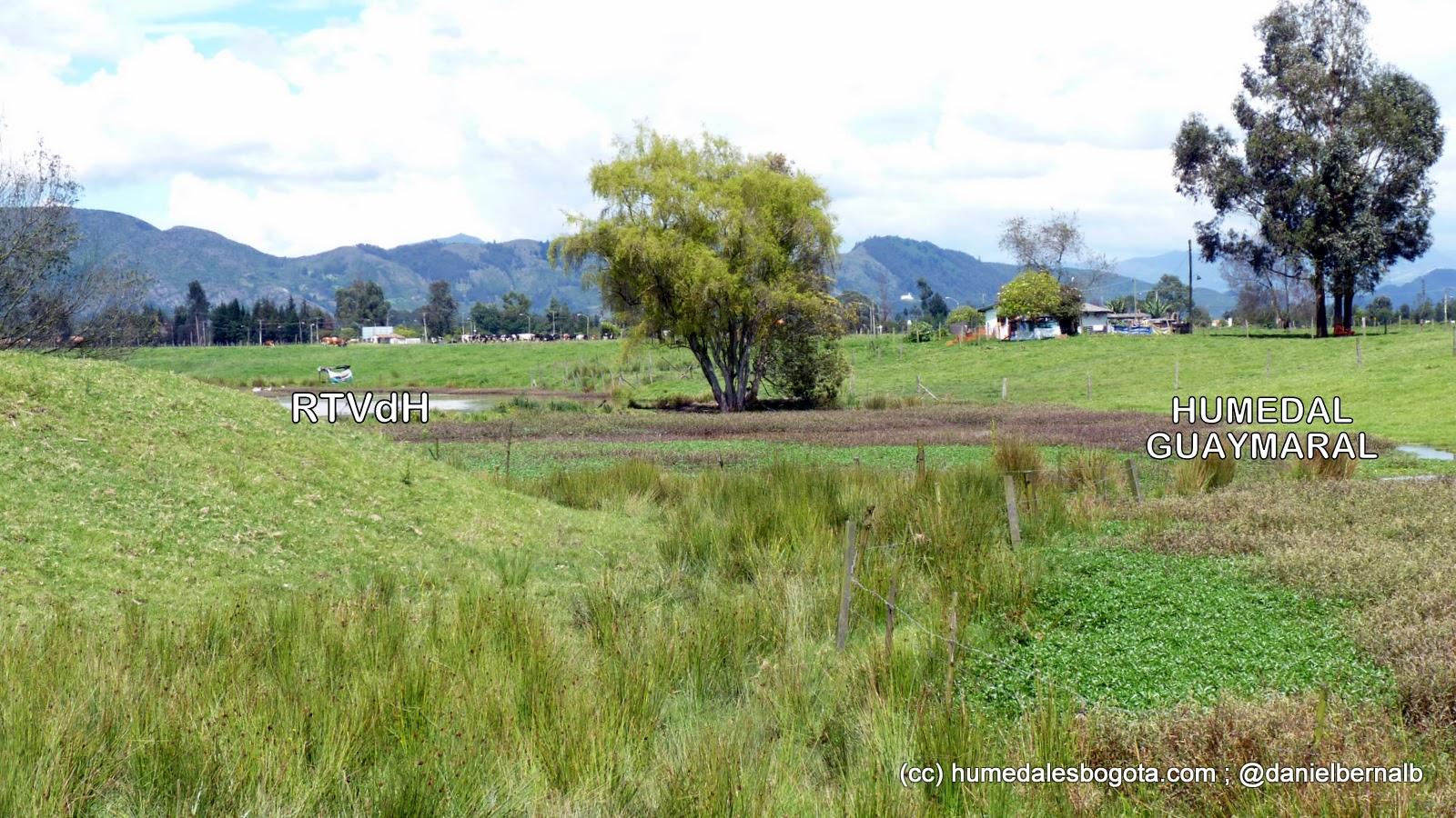 Humedal Torca-Guaymaral, sector Guaymaral vecino a la Reserva Thomas Van der Hammen