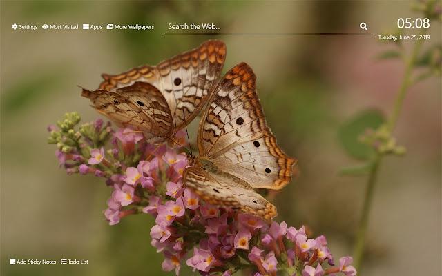 Butterflies Wallpaper HD New Tab Theme