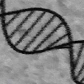 DNA toolkit