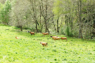 Photo: vacas