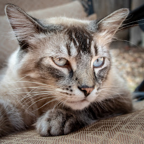 Another nice portrait by Karoner Gaming - Animals - Cats Portraits