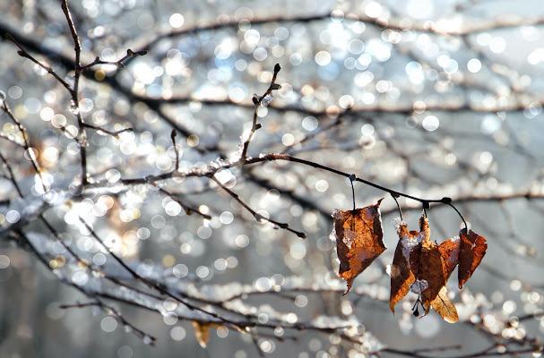 Atmosfere invernali