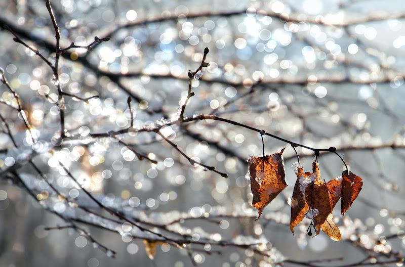 Atmosfere invernali  di natalia_bondarenko