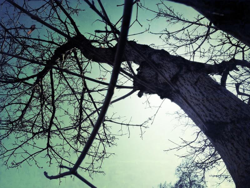 Photo: Grunge Tree Hill
