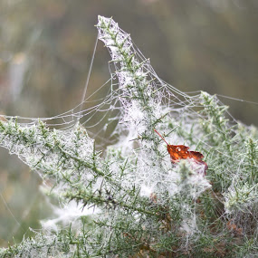 Solo leaf by Stuart Lomas - Nature Up Close Webs ( sdl )