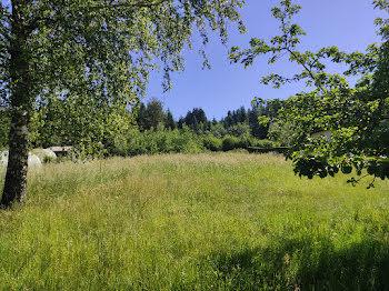 terrain à Bertrichamps (54)