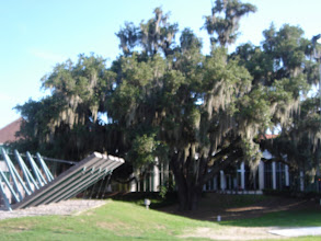 Photo: a spanish moss tree - i just thought it was beautiful