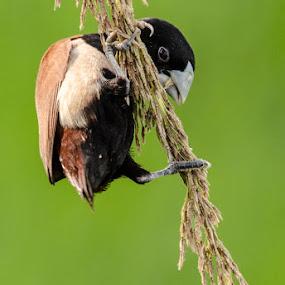    Lunch    by Indra Maji - Animals Birds