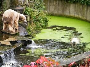 Photo: Knut laesst die schwimmende Gianna nicht aus den Augen ;-)