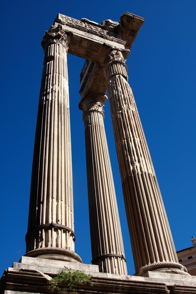 Roma di Luciano53