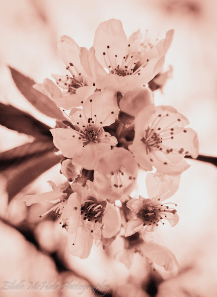 Photo: Day 185 of my #365project I do love blossom and for #todaytuesday by +Brian White