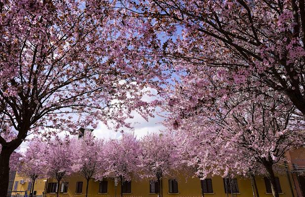La primavera si prende la scena