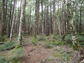 広い樹林帯の緩やかな登りに