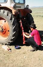 Photo: 03244 ブルド/バスハダール家/タルバガン(野獣)の解体