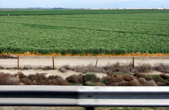 Photo: Hay fields views off of I-5 in SoCal