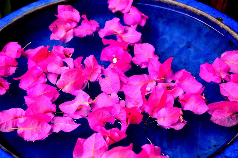 Blu e rosa di MORENO ANTOGNOLI