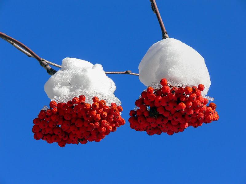 Neve...du palle ! di D. Costantini