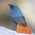 Birds Complete Reference Guide APK