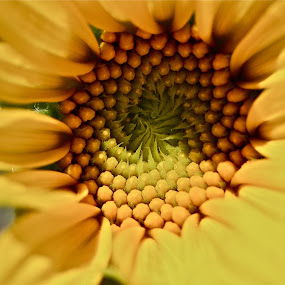 A beautiful sunflower by Rose Smith - Flowers Single Flower ( a, beautiful, for, sunflower, you,  )