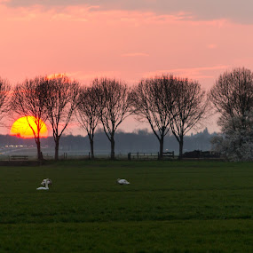 Rush hour sunset. by Nico Sinselmeijer - Landscapes Sunsets & Sunrises ( field, sky, highway, rush hour, sunset, trees, working, netherlands, goose )