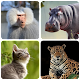 Mammals – Learn All Animals in Foto-Quiz! for PC-Windows 7,8,10 and Mac