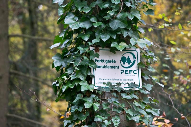 NATUUR - Steeds meer duurzaam beheerde bossen in België