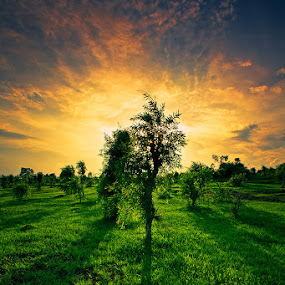 Bukit Api by Ocky  Dwi putranto - Landscapes Sunsets & Sunrises ( field, hill, nature, tree, sunset, green, api, bukit, fire )