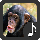 Monkey Sounds