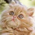 kittens wallpapers icon