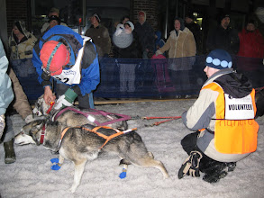 Photo: Near the starting line, Jim's attaching a blinking light to one of the lead dogs