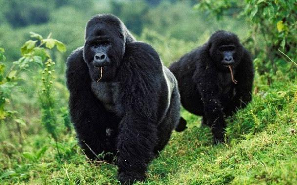 Republica do Congo