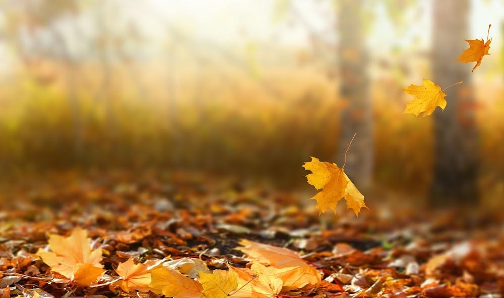 autumn-places-in-india_image_1