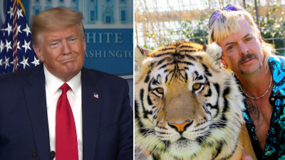 Donald Trump juxtaposed with a tiger and Joe Exotic, the Tiger King