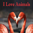 I Love Animals icon