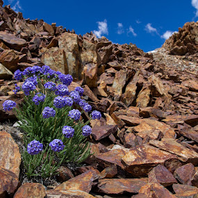 by Dan Shimmon - Nature Up Close Rock & Stone