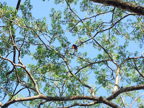 Photo: Malabar Giant Squirrel at Kabini in 2006