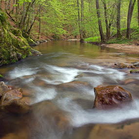 by Siniša Almaši - Landscapes Waterscapes ( water, up close, stream, green, colors, white, forest, flow, morning, landscape, spring, woods, depth, nature, tree, cascade, trees, view, stones, rocks, river )