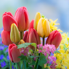 april tulips by Kitty Bern - Nature Up Close Flowers - 2011-2013 ( , Flowers, Flower Arrangements )