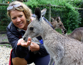 Photo: Year 2 Day 153 - Feeding the Roos