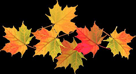 Sorelválasztók, őszi faleveles | Neked hoztam