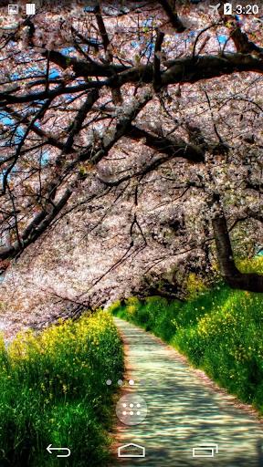 Sakura Live Wallpaper 4K
