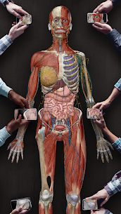 Human Anatomy Atlas 2021:Complete 3D Human Body 7