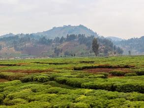 Photo: Rubavu district - tea plantation