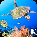 Turtle 4K Live Wallpaper icon