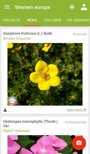 riconoscimento piante