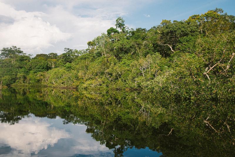 amazon river Peruvian jungle
