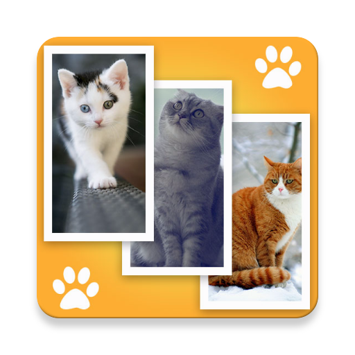 Cat Wallpapers Hd Apps On Google Play
