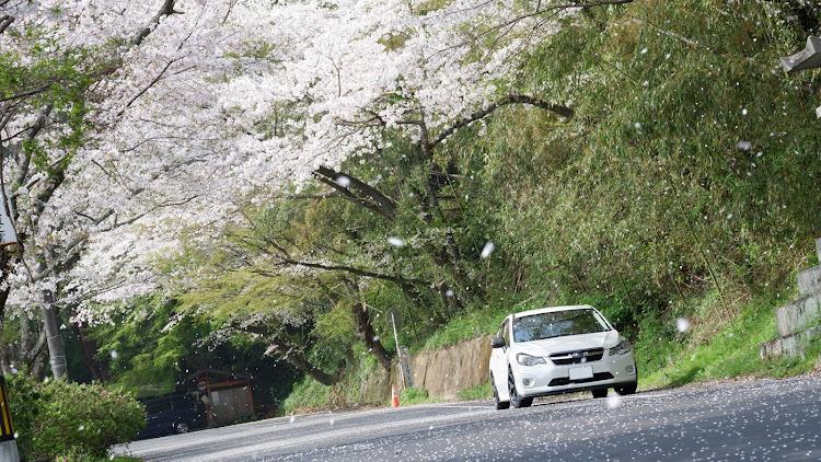 インプレッサ スポーツ GP6の桜と愛車,桜とコラボ,桜とスバル,桜に関するカスタム&メンテナンスの投稿画像6枚目