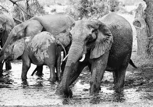 Photo: Olifanten bij het waterhole